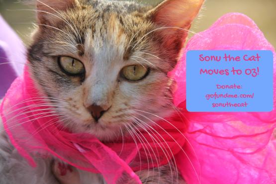 sonu the cat banner ad